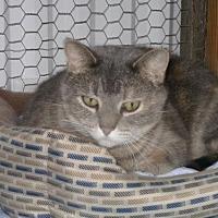 Adopt A Pet :: Emily - Sparta, WI