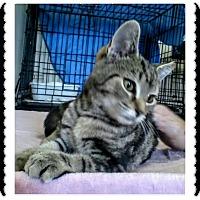 Adopt A Pet :: Sally - Trevose, PA