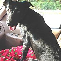 Retriever (Unknown Type) Mix Dog for adoption in Acworth, Georgia - Barney