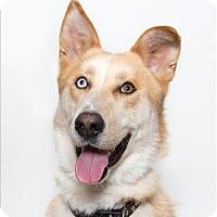 Adopt A Pet :: Rambo - San Luis Obispo, CA