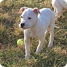 Adopt A Pet :: Raphael
