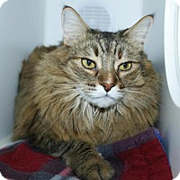 Adopt A Pet :: Carly - Grass Valley, CA