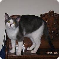 Adopt A Pet :: Missy - Lombard, IL