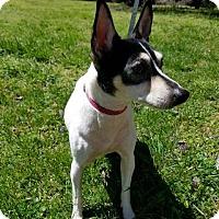 Adopt A Pet :: Girl - Brattleboro, VT
