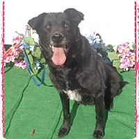 Adopt A Pet :: JAZZY see also BANKS - Marietta, GA