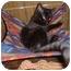 Photo 2 - Domestic Mediumhair Cat for adoption in Stuarts Draft, Virginia - Lucy