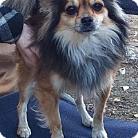 Adopt A Pet :: Louie - Temecula, CA