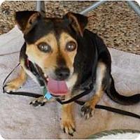 Adopt A Pet :: Mona - Kingwood, TX
