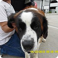 Adopt A Pet :: Baxter - Missouri City, TX
