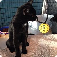 Adopt A Pet :: Rosa - Deerfield Beach, FL