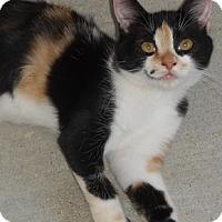Adopt A Pet :: Calica - North Highlands, CA