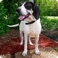 Hound (Unknown Type) Mix Dog for adoption in Ardmore, Pennsylvania - Kenya