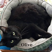 Adopt A Pet :: Olive - Bentonville, AR