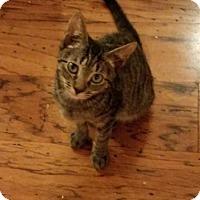 Adopt A Pet :: Lizzy - West Palm Beach, FL