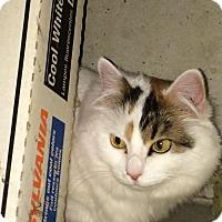 Adopt A Pet :: Wiley - Columbus, OH