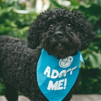 Adopt A Pet :: Andie - Pacific Grove, CA