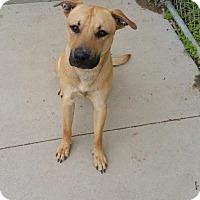 Adopt A Pet :: Winston - Maquoketa, IA