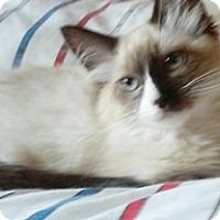 Adopt A Pet :: Hellen - North Highlands, CA