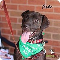 Adopt A Pet :: Jake - Alpharetta, GA