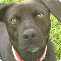 Adopt A Pet :: Drake - Miami, FL