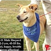 Adopt A Pet :: # 735-11 @ Animal Shelter - Zanesville, OH