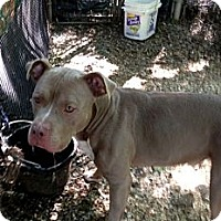 Adopt A Pet :: torque - Wanaque, NJ