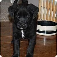 Adopt A Pet :: Braveheart - Glastonbury, CT