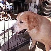 Adopt A Pet :: Jeremy - Rocky Mount, NC