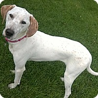 Adopt A Pet :: Zoey - Lakeville, MN