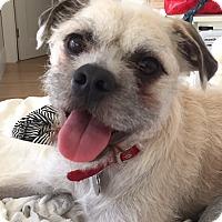 Adopt A Pet :: Mork - Winters, CA