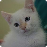 Adopt A Pet :: O'Reily - Canoga Park, CA