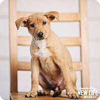 Adopt A Pet :: April - Portland, OR