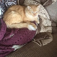 Adopt A Pet :: Chili - Hamilton., ON