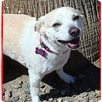 Adopt A Pet :: Jewels - Las Vegas, NV