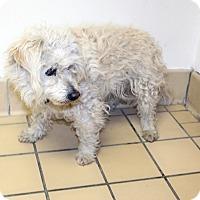 Adopt A Pet :: Maggie - Lumberton, NC