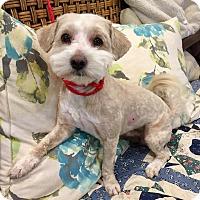 Adopt A Pet :: Milo - Santa Ana, CA