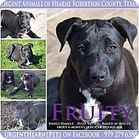 Adopt A Pet :: Fruity - Hearne, TX