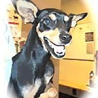 Adopt A Pet :: manny - calimesa, CA