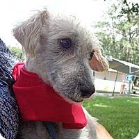Adopt A Pet :: Casey - Brooksville, FL
