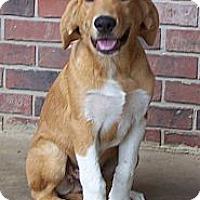 Adopt A Pet :: Marlie - Conway, AR