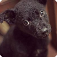 Adopt A Pet :: Phoenix - Fredericksburg, VA