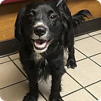 Adopt A Pet :: Toni - Los Angeles, CA