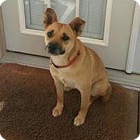 Adopt A Pet :: Martie - pending - Manchester, NH
