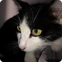 Adopt A Pet :: Tony - Cumming, GA
