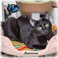 Adopt A Pet :: Aurora - Howell, MI