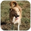 Photo 1 - Siberian Husky/Collie Mix Dog for adoption in Poland, Indiana - Noelle