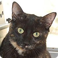 Adopt A Pet :: Kibbie - Hot Springs, AR