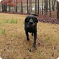 Adopt A Pet :: Maggie - Danbury, CT