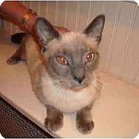 Adopt A Pet :: Sabrina - Riverside, RI