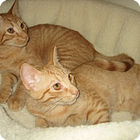 Adopt A Pet :: CINDY - 2014 - Hamilton, NJ